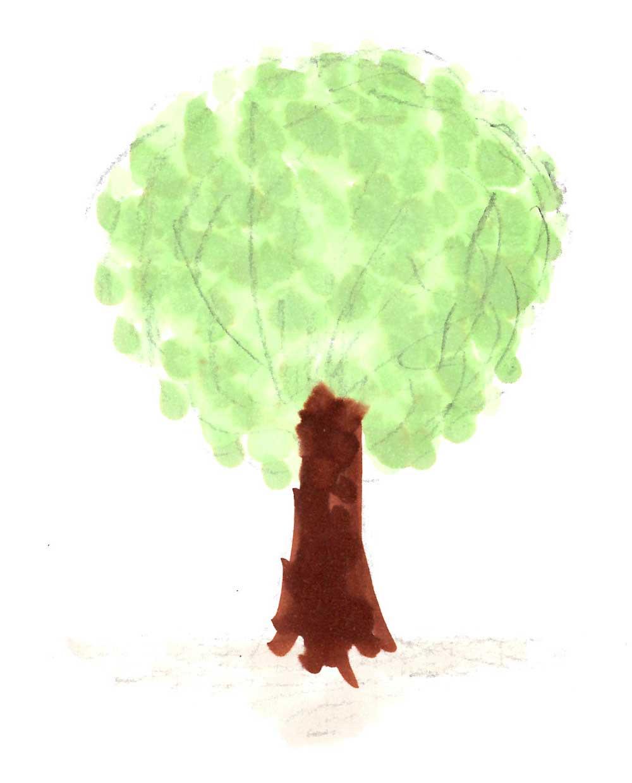 硬く模様が美しい広葉樹