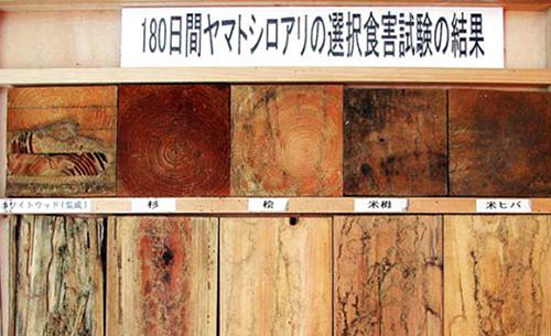 180日間ヤマトシロアリの選択食害試験の結果